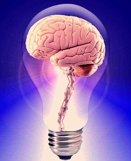 translators-brain